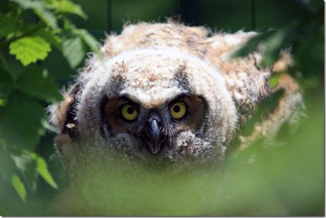 Owlblog1