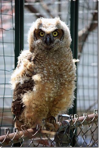Owlblog2