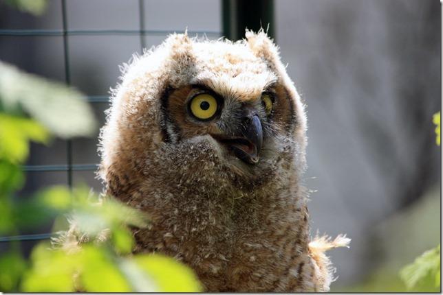 Owlblog4